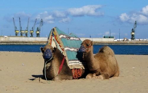 playa de tanger viajar a marruecos
