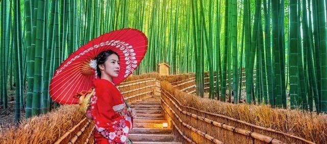 bosque bambu viajar sola a japon